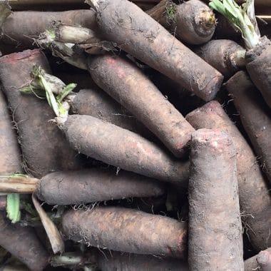 racines endives fournisseur